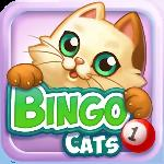 bingo cats gameskip