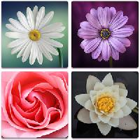 flower memory game for adults and kids - free gameskip