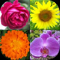flowers quiz: beautiful plants gameskip