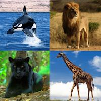guess the animal gameskip