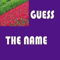 guess-the name gameskip
