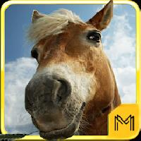 horse breeds and pony quiz hd gameskip