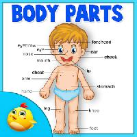 learning human body part 1 gameskip