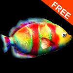 paint me a fish! free gameskip