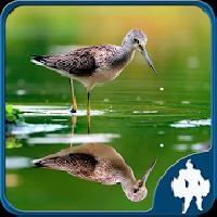 reflection jigsaw puzzles gameskip