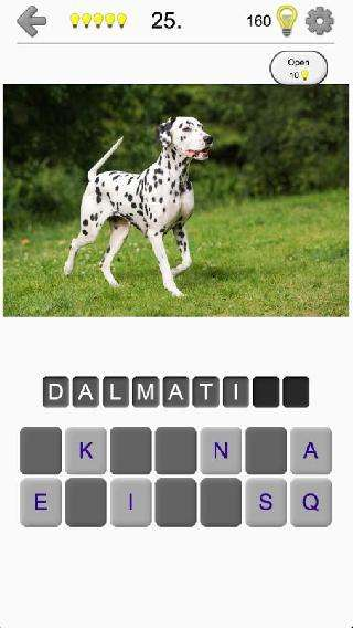 dogs quiz: guess breeds photos