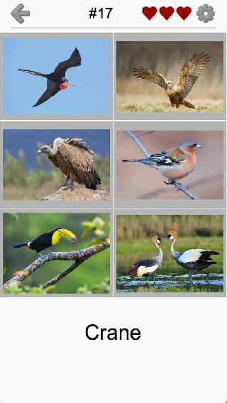 birds world - feathered quiz