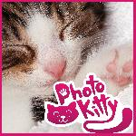 photo kitty